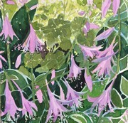 Hostas in Bloom, watercolour, 8 x 8 inches, mounted on cradled board